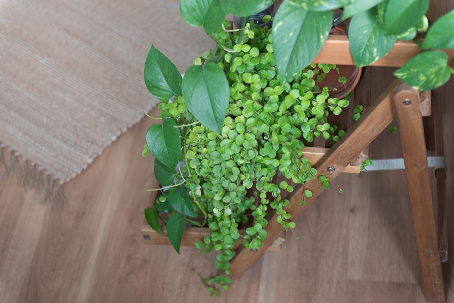 Pflanzen in Küche