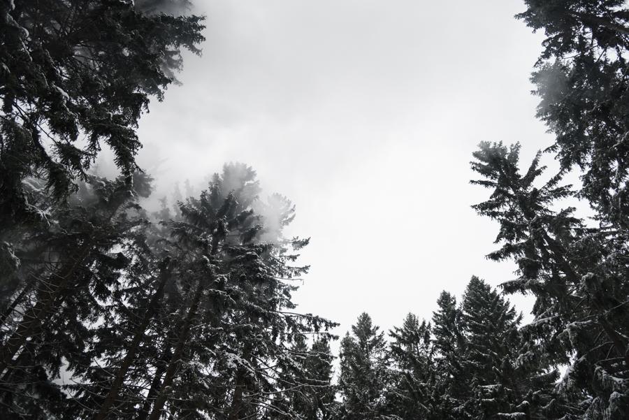 Wald Brocken Harz