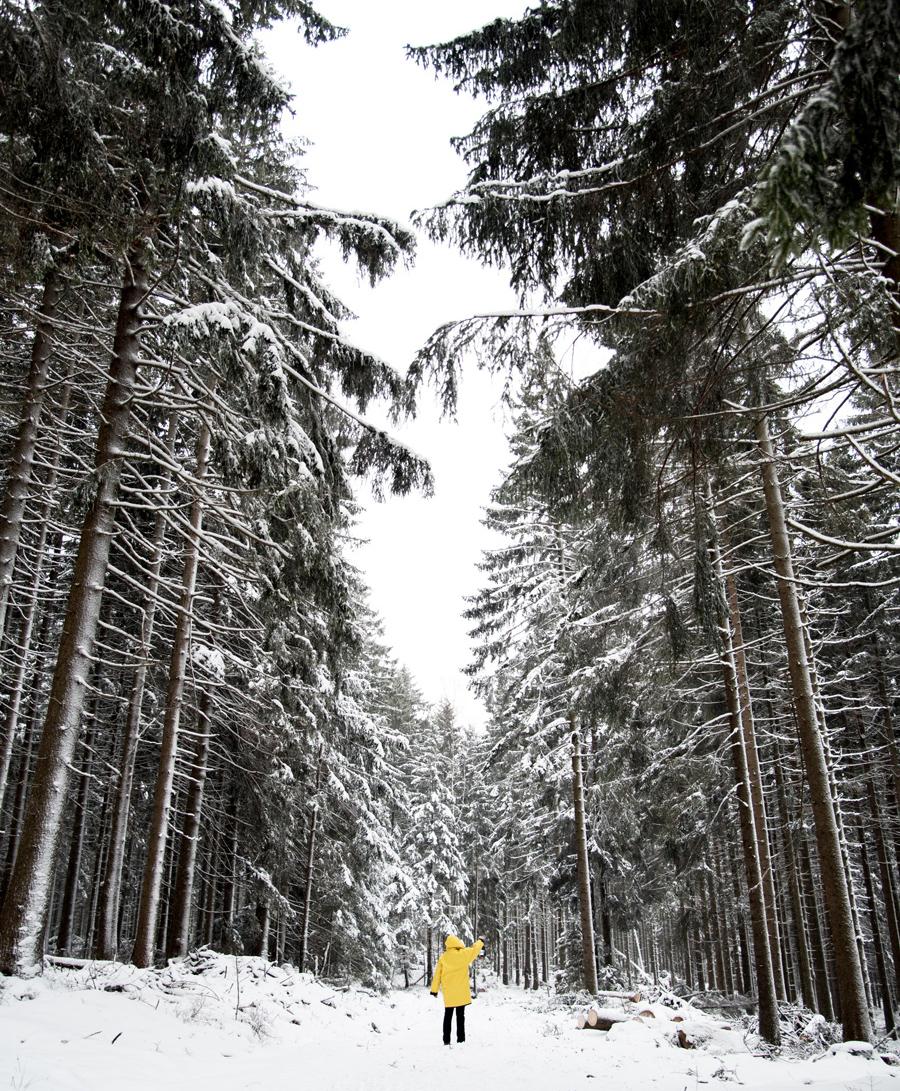 Winter im Harz Brocken