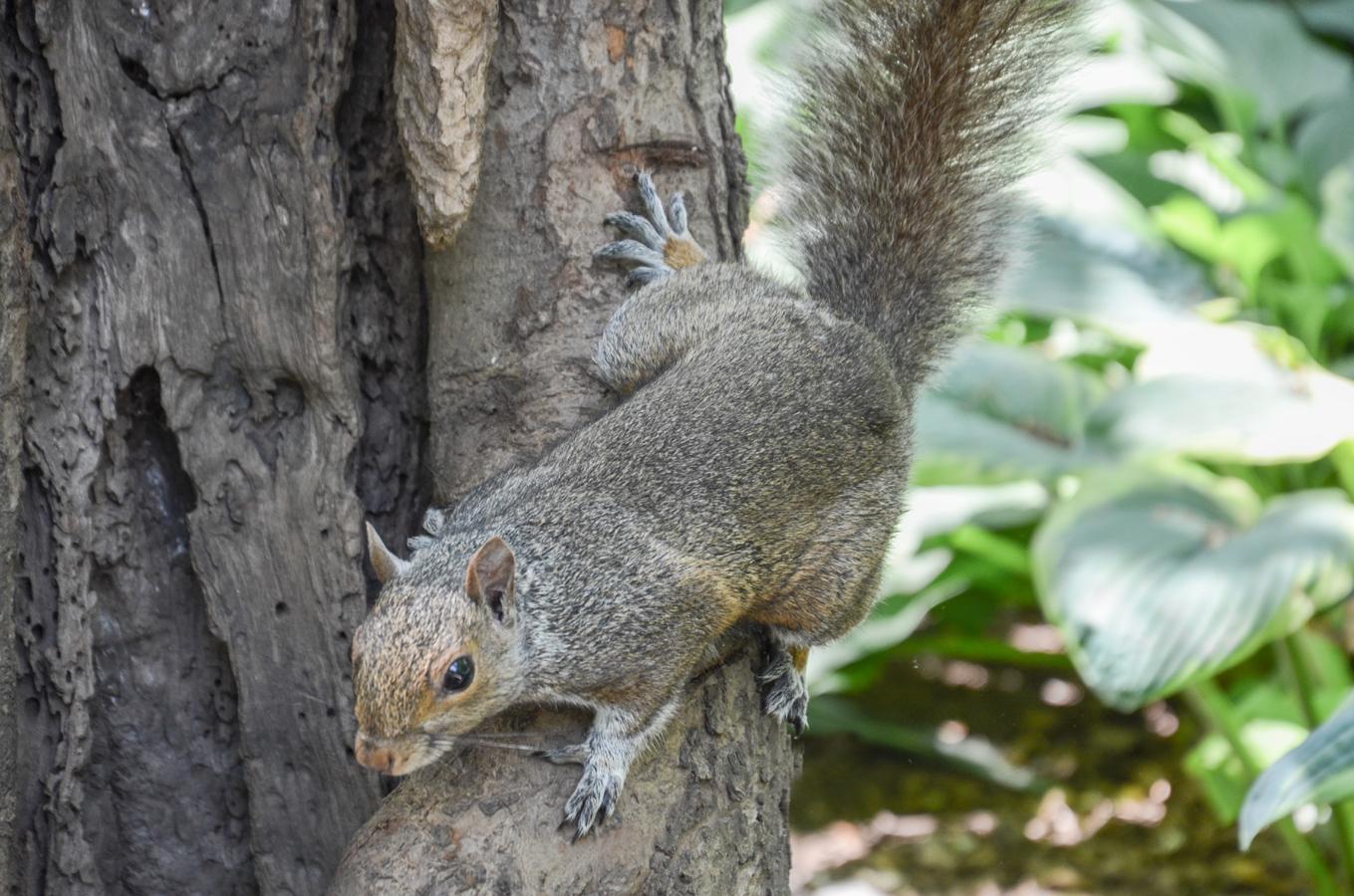 Eichhörnchen Park New York