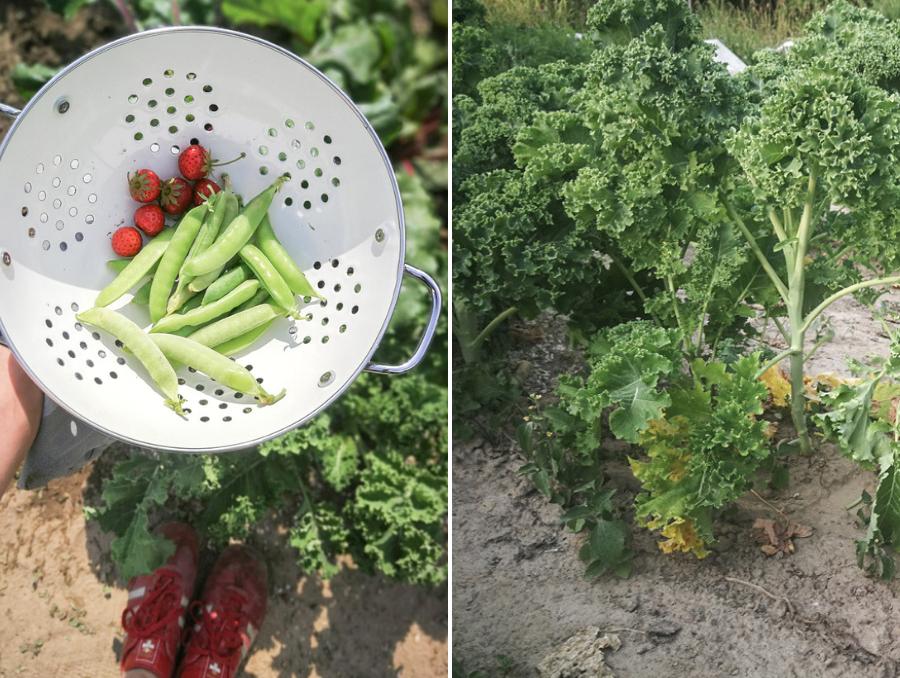Garten in Bochum mieten - meine Erfahrungen
