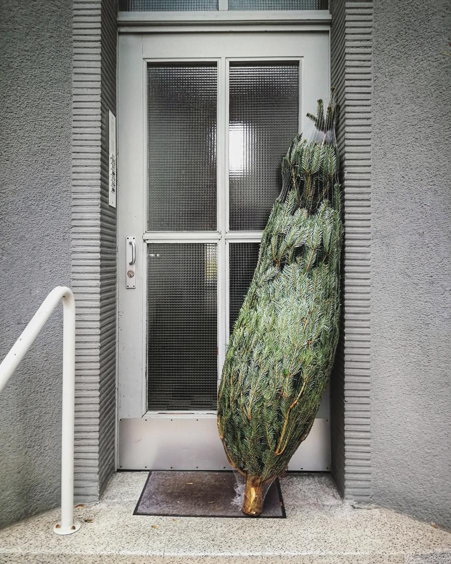 Weihnachtsbaum vor Tür