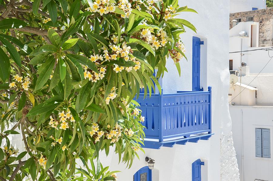 Balkon Kos Griechenland Blüte