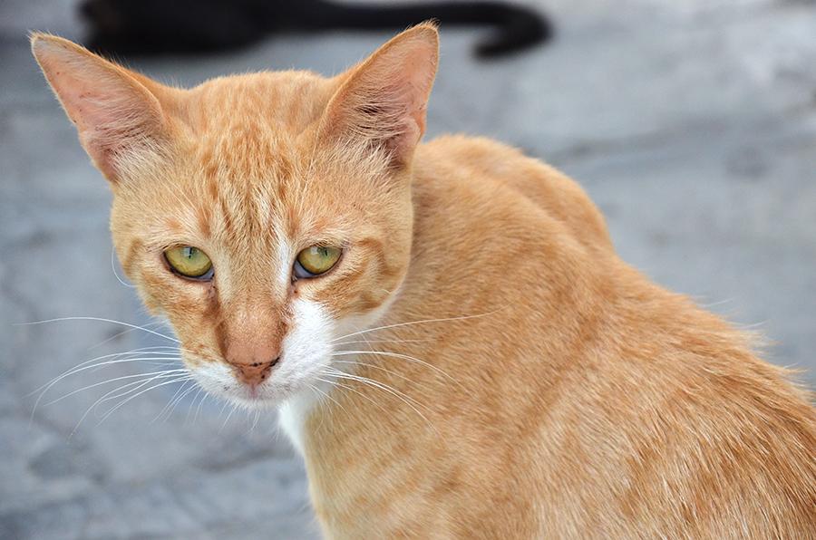 Katze Kos Griechenland