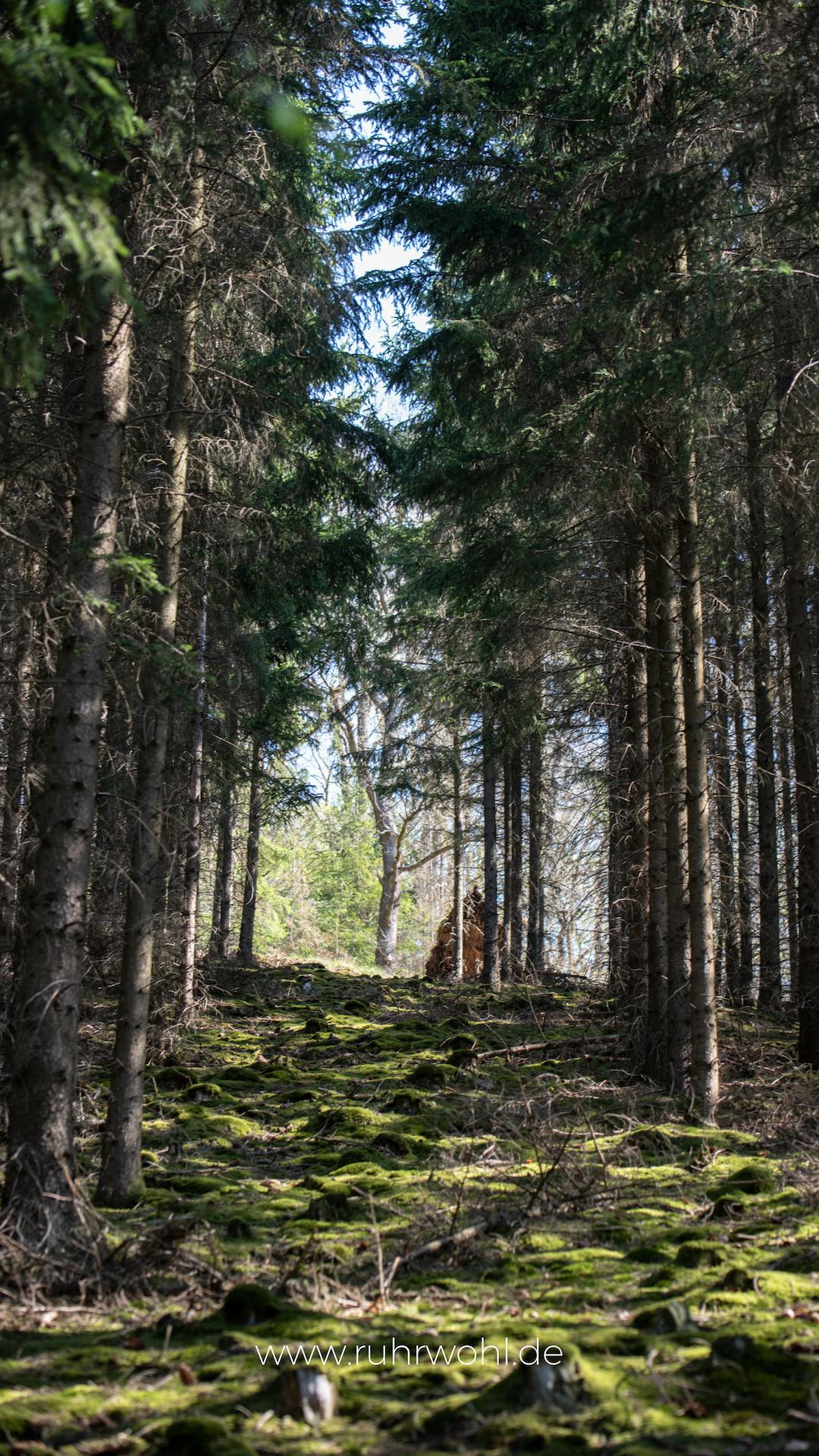 Wallpaper Sperrbildschirm iPhone dunkel Natur Wald