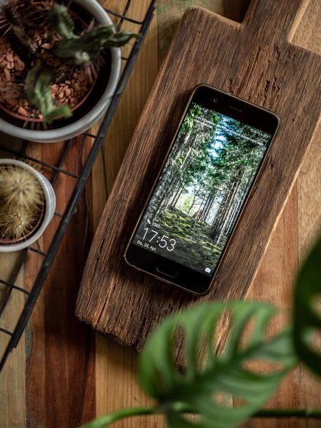 Kostenlose Wallpaper fürs Smartphone mit Wald-Motiv