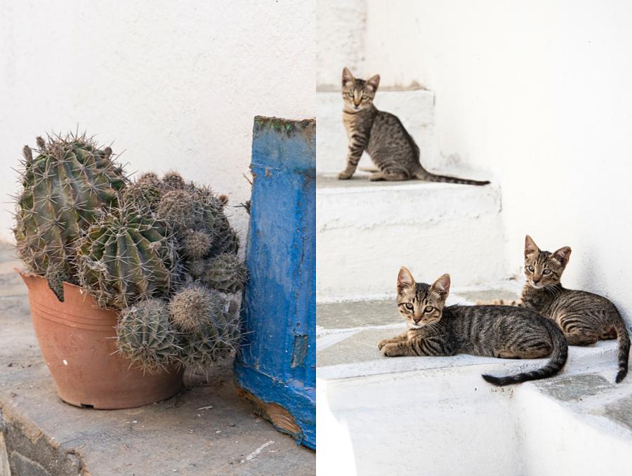 Katzen auf Nisyros in Griechenland, Ägäis