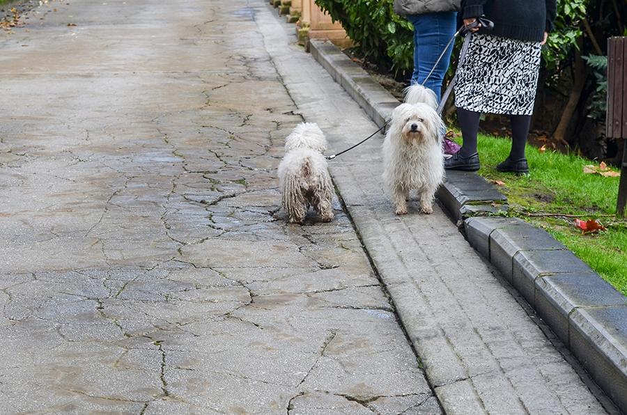 Hunde in Oviedo, Spanien: Dem Geheimtipp für eure Spanienreise
