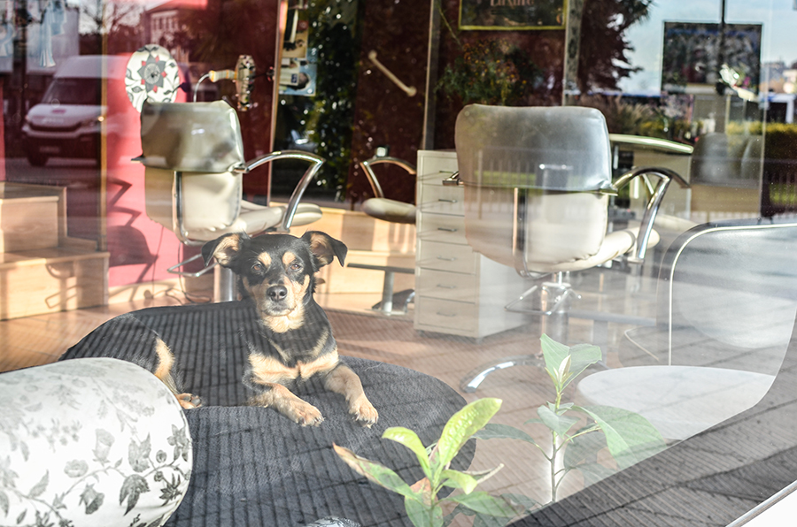 Hund in Salon in Oviedo, Spanien